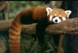 panda1_709041545401