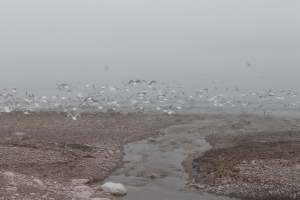 A kinda neat picture I took in PEI of a flock of seagulls flying away