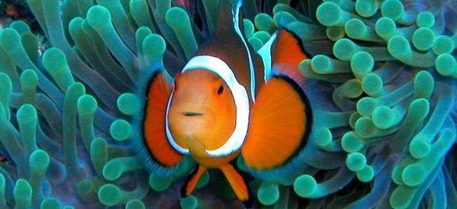 Как слышать самого себя в clownfish
