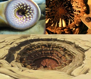 A comparison of a lamprey mouth, a sandworm, and sarlacc. Pictures from Wikipedia and http://games.slashdot.org/story/10/04/01/2248242/star-wars-the-old-republic-sarlacc-enforcer-class-unveiled