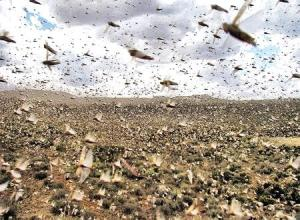 A swarm of locusts.  Photo source: http://bit.ly/1oEA0U5
