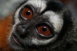Okay -- night monkeys are terrifying.  Image source: DuSantos via Wikipedia