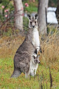 They're pretty cute. Especially the little one. Image credit: fir0002 via Wikipedia