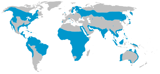 Pandion_haliaetus_global_range.svg