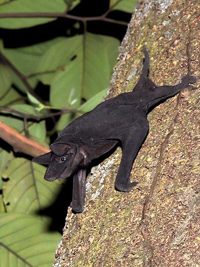 naked-bulldog-bat-2_LTM.jpg