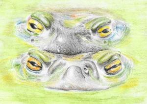 Colorado River Toad Copy