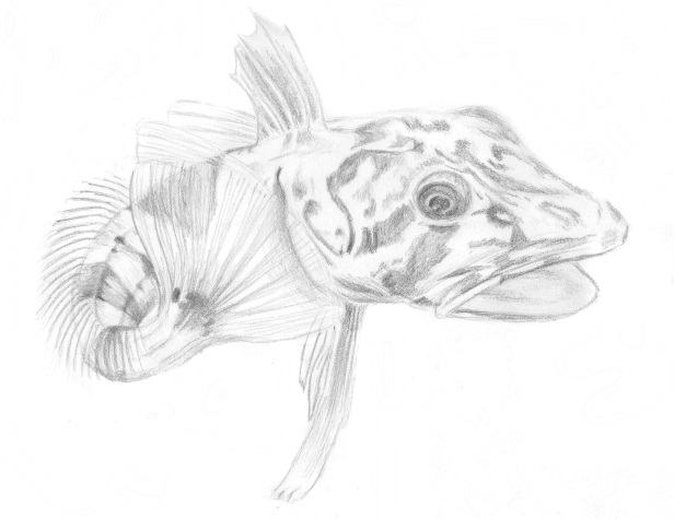 crocodile-icefish