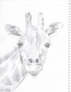 giraffe-sketch-1