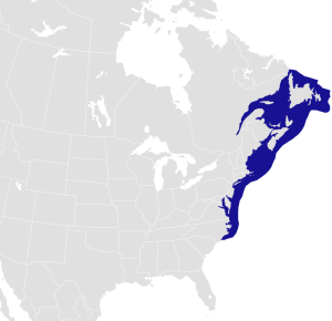 homerus_americanus_distribution