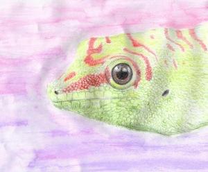 day-gecko