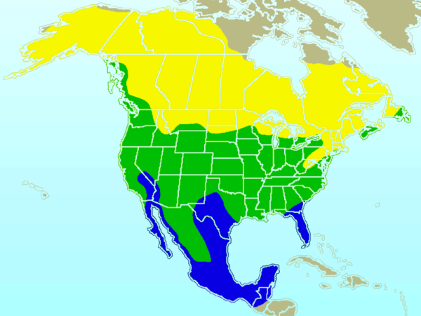 american_robin-rangemap