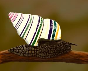 candy-cane-snail