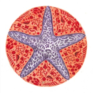 purple sea star 1