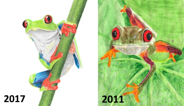 red eyed tree frog comparison
