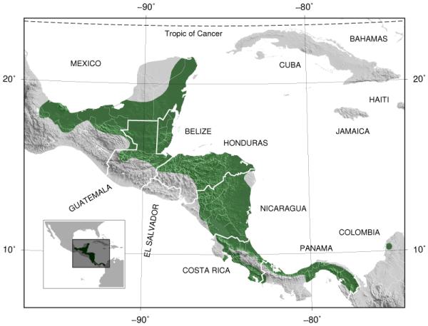 Red-eyed_Treefrog_Agalychnis_callidryas_distribution_map_3