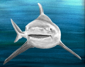 Bull shark with background