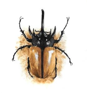 Rhinocerous beetle print