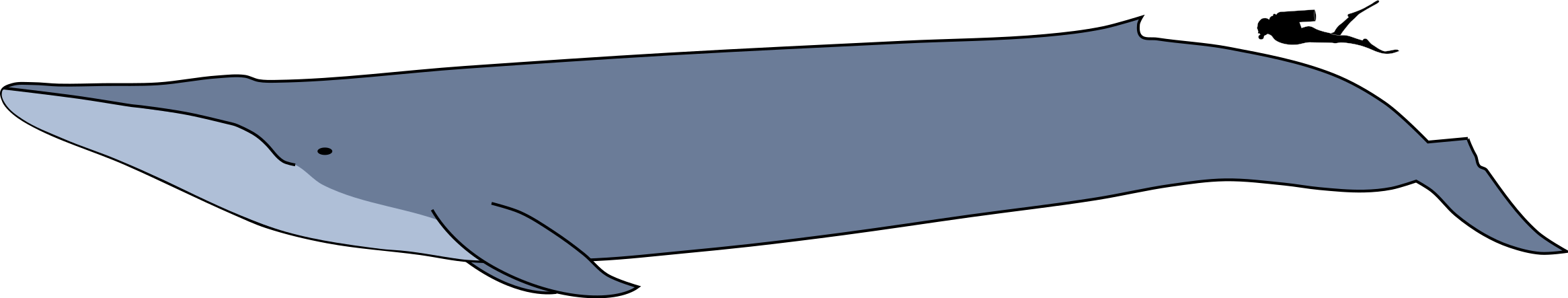 Blue_whale_size.svg.png