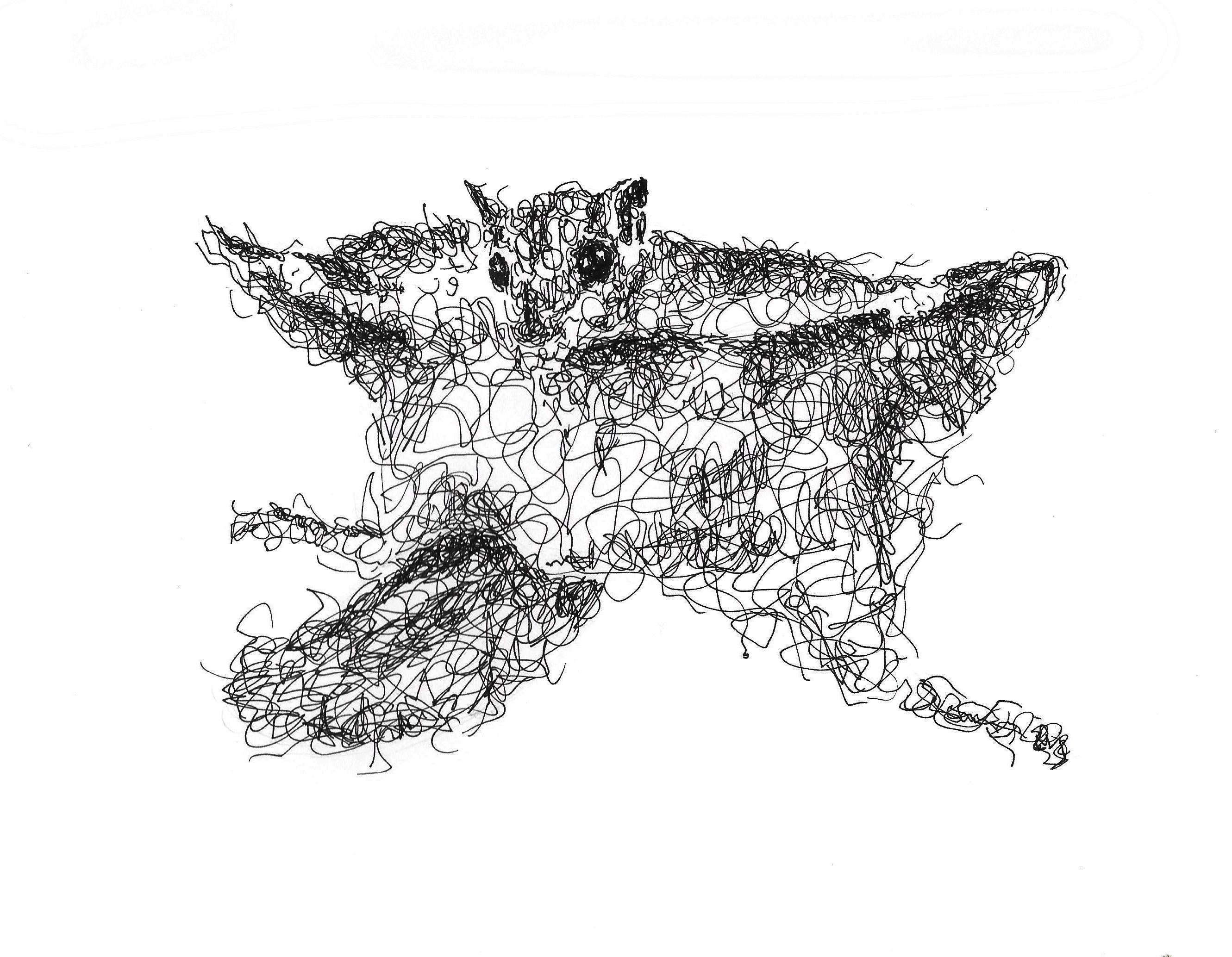 Flying squirrel.jpg
